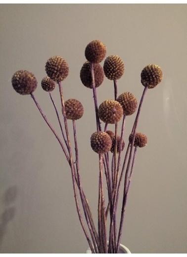 Kuru Çiçek Deposu Mor 20 Adet Crespedia Kuru Çiçek Mor